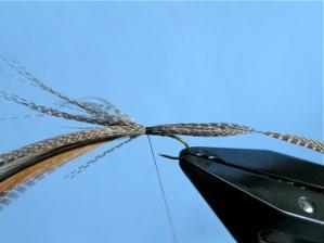 Crane Fly Step 3