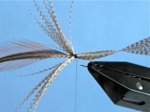 Crane Fly Step 4